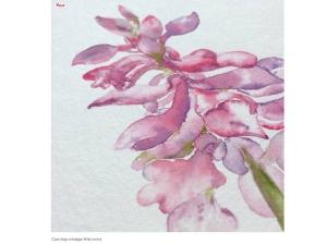 Labri, orhideja2